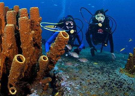 Diving + Snorkeling Excursions from Bavaro Punta Cana.